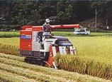 京都米ができるまで 収穫期(9月~10月)