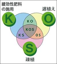 緩効性肥料の施用(K) 遅植え(O) 疎植(S) KOSの図